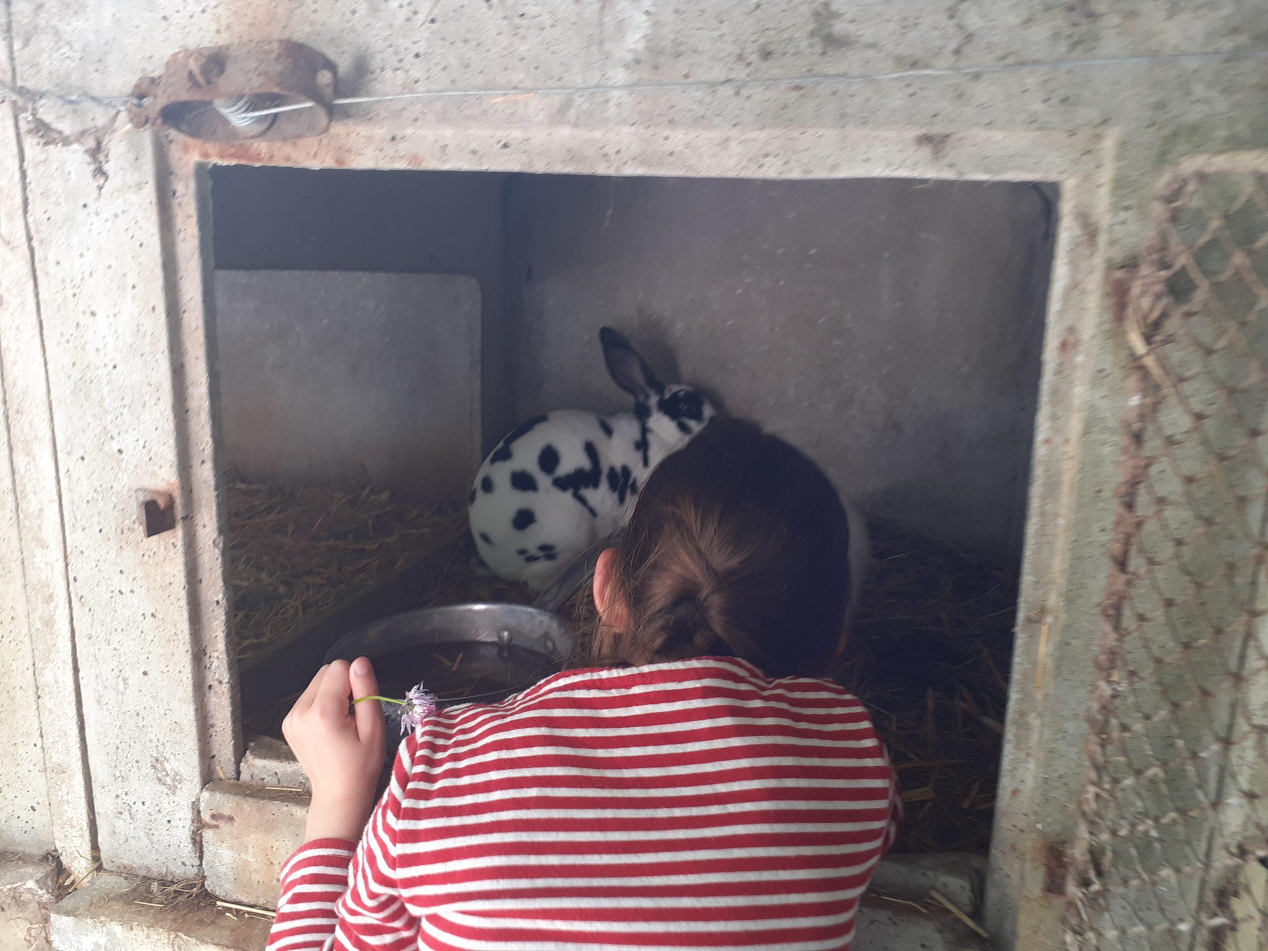 Un enfant devant une cages à lapin