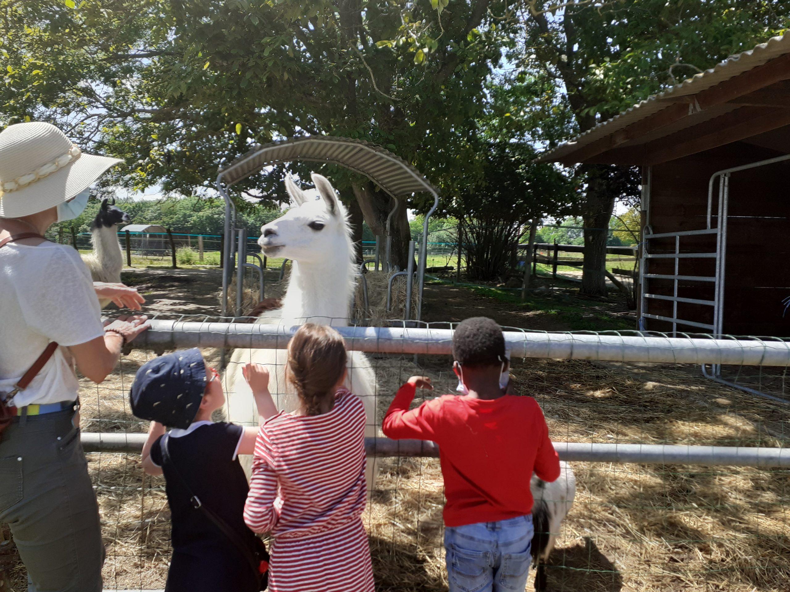 Des enfants devant un lama