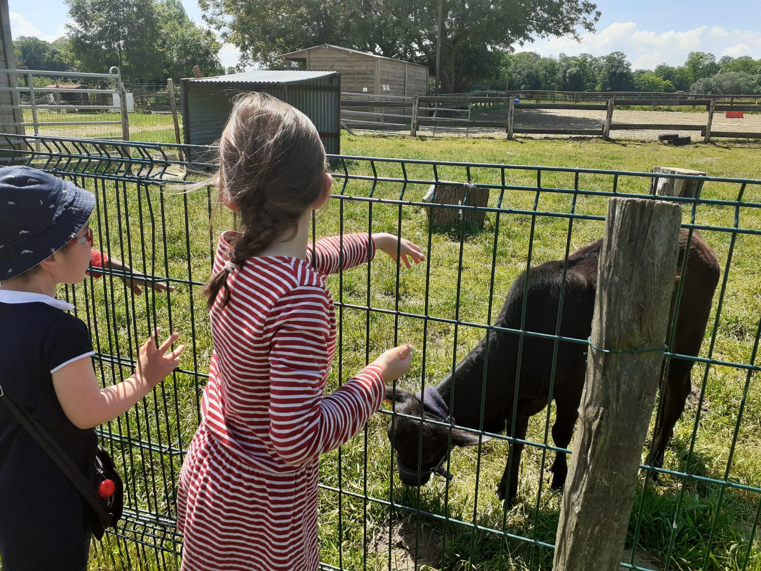 Des enfants devant une chèvre